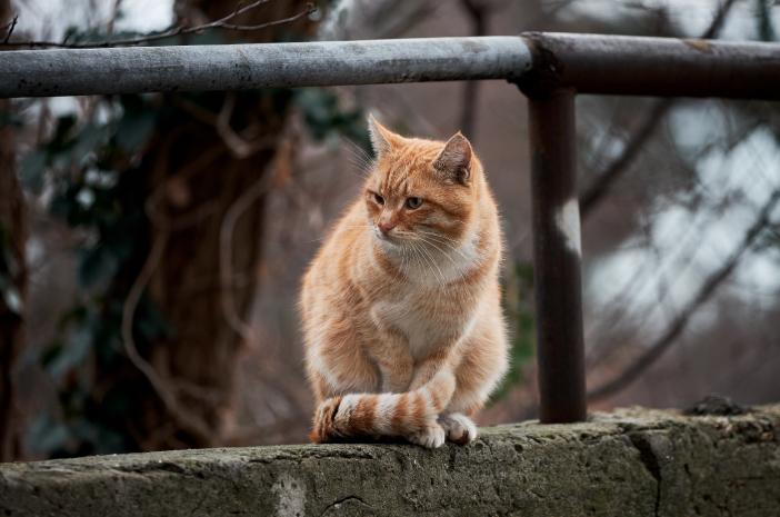 Begini Cara Merawat Kucing yang Tuli