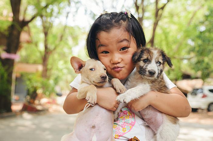 Cara Mengajarkan Anjing Kampung agar Lebih Menurut