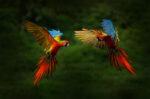 Beberapa Jenis Burung Nuri yang Memiliki Suara Indah