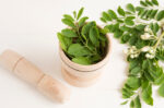 benarkah daun kelor bisa bantu atasi asam lambung halodoc