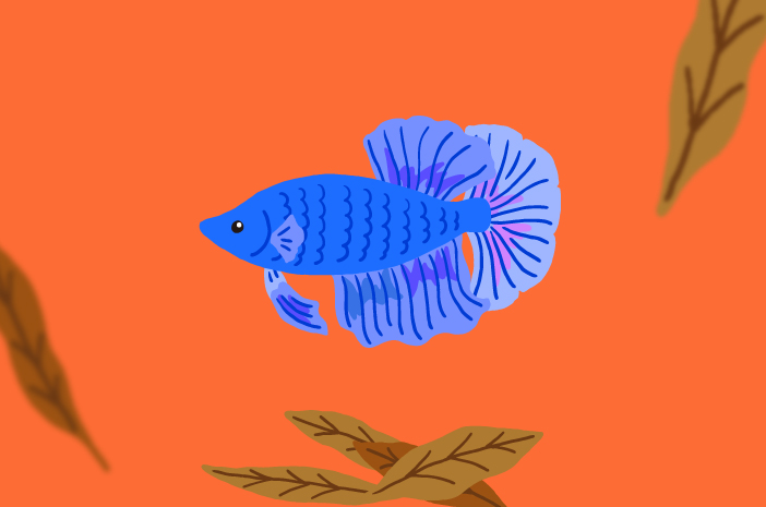 Apa Manfaat Daun Ketapang untuk Ikan Cupang?