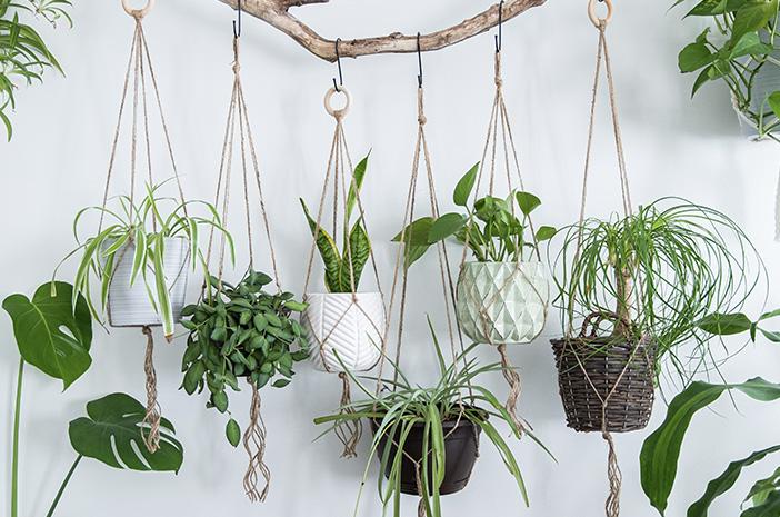 merawat tanaman