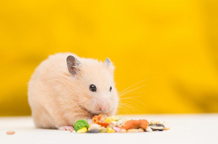 Apa Saja Makanan yang Aman untuk Dikonsumsi Hamster?
