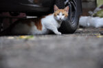 Hal yang Perlu Diperhatikan saat Mengadopsi Kucing Jalanan