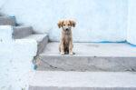 Cara Melatih Anjing Kampung Agar Patuh dan Setia