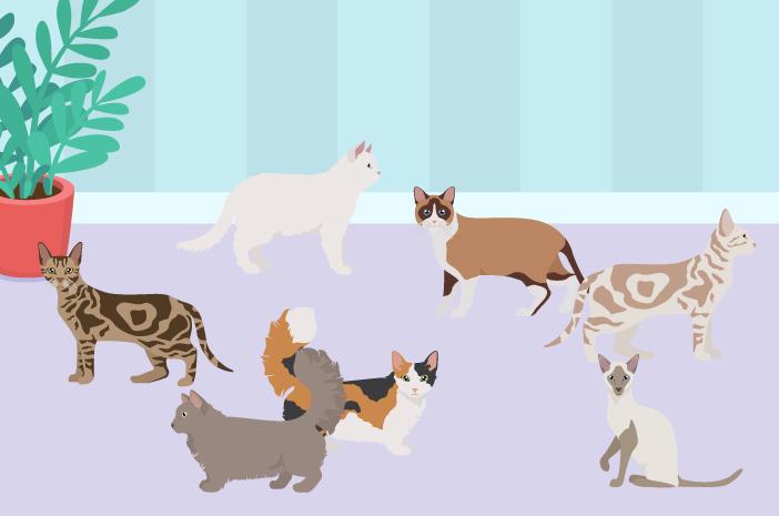 Ketahui 5 Jenis Kucing yang Paling Bersahabat