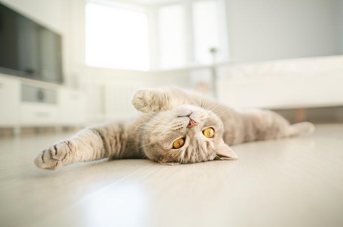 5 Manfaat Kucing Suka Melakukan Peregangan
