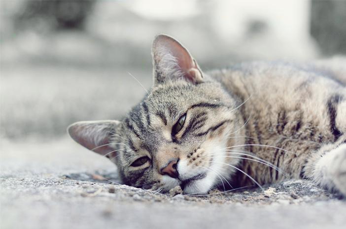 Cara Menggunakan Virgin Coconut Oil untuk Mengatasi Sembelit pada Kucing