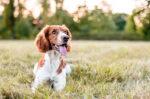 4 cara efektif mengatasi bulu anjing yang rontok halodoc