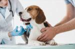 catat-ini-jadwal-dan-manfaat-vaksin-pada-anjing-halodoc