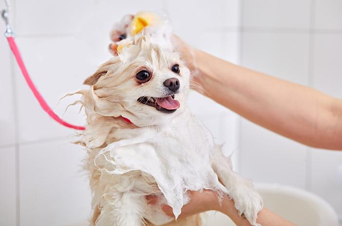 Begini 6 Cara Memandikan Anak Anjing