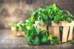 khasiat daun mint untuk kesehatan yang jarang diketahui