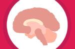 Mengenal Lebih Jauh Fungsi Hippocampus pada Otak