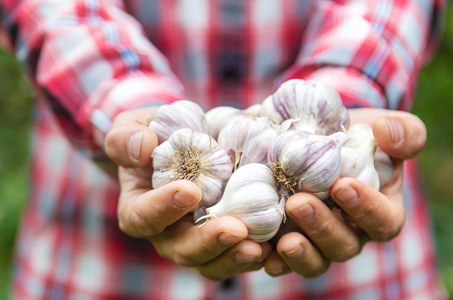 Kenali 3 Manfaat Bawang Putih untuk Kesehatan Pria