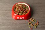 tips-dalam-membeli-makanan-kucing-bagi-pemula-halodoc