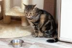 Hal yang Sebabkan Kucing Tidak Mau Makan